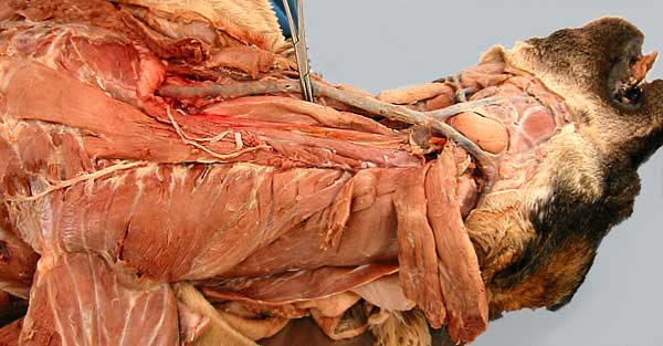 Pictures of cadavers for anatomy