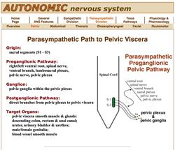Carnivore Anatomy Courseware