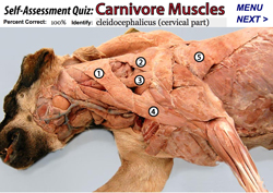 Carnivore Anatomy Courseware