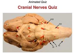 Veterinary Neurobiology Courseware