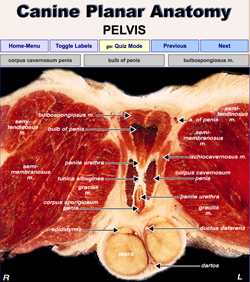 eterinary Planar Anatomy Coursewaree