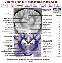 Veterinary Planar Anatomy Courseware