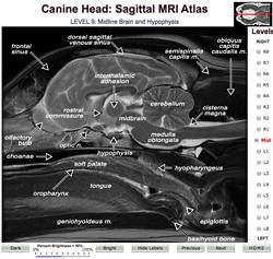 eterinary Planar Anatomy Coursewaree